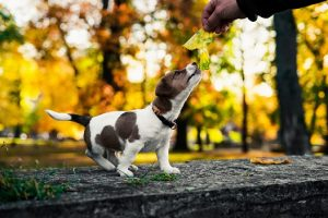 on hold veterinary practice